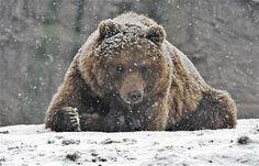 winter pics | ... Братья наши меньшие » 01j winter animals 12.10