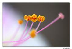 Wonderful macros - a gallery on Flickr