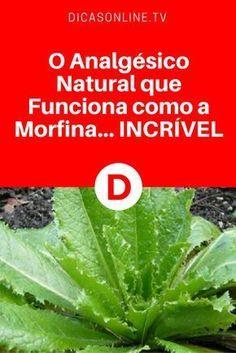O Analgésico Natural que Funciona como a Morfina... INCRÍVEL