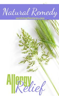 5 Natural Remedies For Seasonal Allergies from www.survivingthestores.com