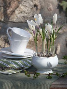 Eine kleine Suppenterrine wird zum Mini-Gärtchen auf dem Terrassentisch - oder dem Esstisch. Die Wachtelfedern (bekommen Sie im Bastelbedarf) verleihen dem Arrangement Leichtigkeit. (Foto: W&G/Alexandra I.)