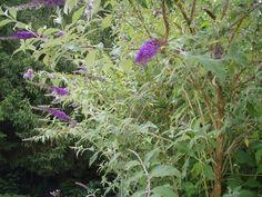 Houzy Pflanzenmanager - Die neue Art der Pflanzenpflege Plants, Butterfly Bush, Watering Plants, Heating Systems, Ornamental Plants, Flora, Plant