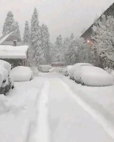 Beautiful Nature Scenes, Beautiful Nature Pictures, Nature Photos, Beautiful World, Beautiful Places, Christmas Scenery, Winter Scenery, Christmas Music, Winter Love
