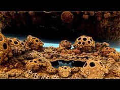 Fractal animation made with Mandelbulb3D. I originally designed it for Bryan Alvarez from UC Berkeley, for a TEDx talk about his Human Atlas project, to illustrate his initial dream about the beauty of living systems. This one is an enhanced version. This is a hybrid Julia fractal where many parameters are being animated: the fractal paramaters ...