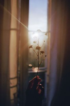 These landscape photography inspiration are really awesome Tumblr Photography, Vintage Photography, Creative Photography, Light Photography, Photography Poses, Landscape Photography, Photography Flowers, Morning Photography, Aesthetic Photography Nature
