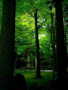 #Japan #garden ryoanji