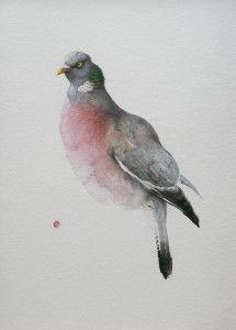 Wood Pigeon - Karl Mårtens - watercolor