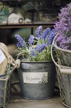 Grape hyacinth and lavendar