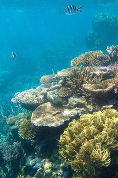 Great Barrier Reef, Australia-The Earth's Tears