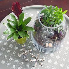 Você pode adorar muito fazer este artesanato verde com este passo a passo. É só arranjar as plantas e um vidro legal para fazer o trabalho. Para descobrir como fazer este terrário para plantas em casa, aprenda neste post através de dicas simples!