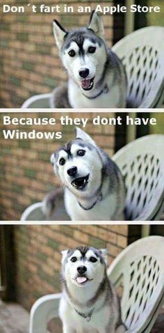 37 Funny Puns That Are So Bad They're Simply Hilarious Funny Puns used to be the most annoying things. Everyone would roll their eyes when they heard a funny pun. They were about as bad as dad jokes. everybody funny Dog Jokes, Corny Jokes, Funny Dog Memes, Funny Animal Memes, Cute Funny Animals, Funny Animal Pictures, Puns Hilarious, Funny Quotes, Puns Jokes
