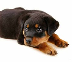 Cute and Sweet Puppies | SocialCafe Magazine