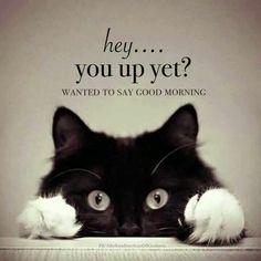 #Caturday 🐱🐱 Love 💚💚 my Kitty.