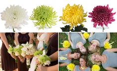 Cremons, Mums and Spider Mums