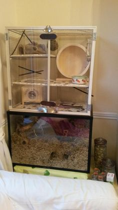 Gerbil Housing Pictures II   The Gerbil Forum   Pinning here as I don't have a gerbil board yet. I'd love something like this for Rocky. Old as he is, though, idk if he'd use it all.