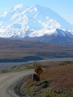 Denali - Alaska :: I miss Alaska. I would love to go back there someday.