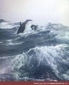 Killer whales on the sea. Killer whales on the sea. The post Killer whales on the sea. & Wale, Delfine und Unterwasser Welten appeared first on Electronique . Orcas, Africa Nature, Animals And Pets, Cute Animals, Baby Animals, Delphine, Ocean Creatures, Tier Fotos, Killer Whales