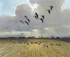 Wildlife Paintings, Bird Watching, Natural History, North America, Bing Images, Fine Art, Park, Drawings, Pastels