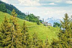 Glückliche Kühe verbringen den Sommer auf saftigen Bergwiesen! #bergevollerschätze #mountainsfulloftreasures #piesendorfniedernsill Zell Am See, Vineyard, Outdoor, Best Ski Resorts, Salzburg Austria, Kaprun, Hiking Trails, Ski, Outdoors