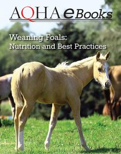 The most important role of equestrian clothing is for security Although horses can be trained they can be unforeseeable when provoked. Riders are susceptible while riding and handling horses, espec… Horse Lead Rope, My Horse, Horses, Horse Riding Clothes, Western Riding, American Quarter Horse, Health Resources, Horse Training, Large Animals