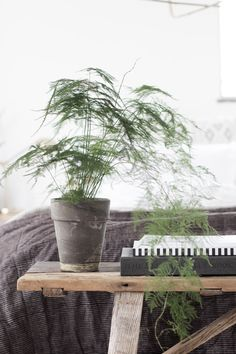 Asparagus plant in my budget bedroom refresh / Photo and production Niki Brantmark - My Scandinavian Home. Styling: Genevieve Jorn. In collaboration with Benson for Beds.