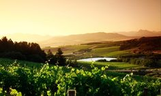 Groupon - Wine Tasting and Pizza from R105 at Vondeling Wines (Up to 55% Off) in Western Cape. Groupon deal price: R105