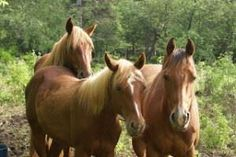 Easy to make fly spray for horses and cattle