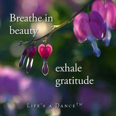 Breathe in beauty, exhale gratitude.