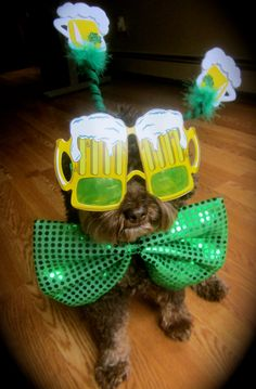 ♣St. Patrick's Day Dog♣ wearing beer glasses and a nice green bow ♣