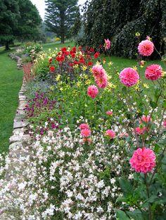 White Flower Farm's display gardens, July