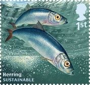 DAVID MILLER's designs for the  Royal Mail from their Sustainable Fish Special Stamps issue showing a Herring.