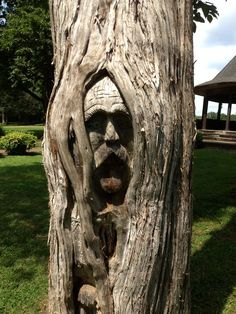 56 Super Ideas For Nature Trees Faces Nature Pictures, Cool Pictures, Weird Trees, Tree People, Tree Faces, Unique Trees, Tree Carving, Old Trees, Tree Trunks