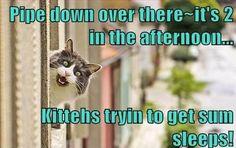 Night shift kitteh...