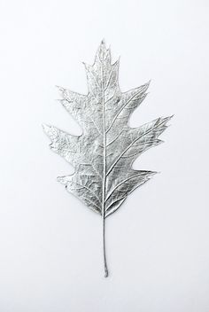 Silver leaves // Spa