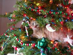 Cats in Christmas Trees-AmO Images-AmO Images