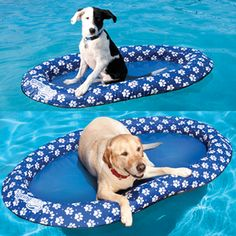 Paddle Paws, pool float for your dog ... Cute