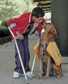 How Purebred-Breeders-service-dog help disabled children to live a better life