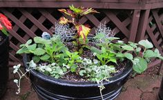 How To Grow Fruits, Vegetables And Herbs In A Container Garden - http://modernfarmer.com/2015/06/how-to-grow-fruits-vegetables-and-herbs-in-a-container-garden/?utm_source=PN&utm_medium=Pinterest&utm_campaign=SNAP%2Bfrom%2BModern+Farmer