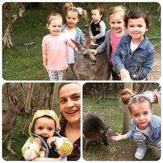 Wildlife fun  #moonlightsanctuary #friendsforkeeps #fridayfunday #saycheese #skippy