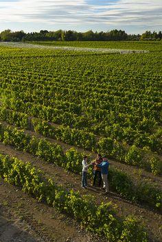 Vue aérienne sur le Vignoble de l'Orpailleur