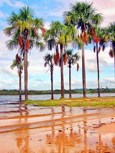 Río Caroní en el Parque Nacional Canaima, Venezuela a lo largo de la frontera con Guyana y Brasil. Este río suministra Guri, la mayor central hidroeléctrica del país y fuente de 60% de la energía de la nación. El parque también incluye el Salto Ángel.