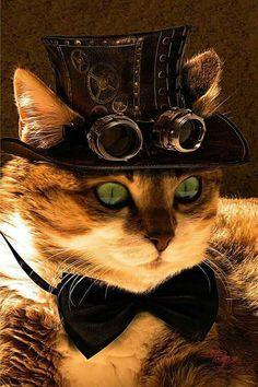 Steampunk Kitty Kat