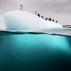 Photo by @DavidDoubilet  A small group of chinstrap and gentoo penguins rest and play on a small island of ice near Danko Island in #Antarctica. The penguins were wary of me at first as I snorkeled around the ice. One penguin would knock another into the water and watch. Once they determined I was not a predator they all began to come and go from their island without worry. With @natgeo @natgeocreative @thephotosociety #ocean #iceberg #penguin #extreme #nature #beauty #life for #moreocean…