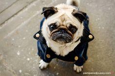 Merrylog...world's cutest pug