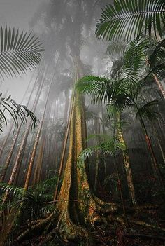 Mount Tamborine Rainforest, South East Queensland, Australia >>> This is beautiful!-One more reason I want to move to Australia Oh The Places You'll Go, Places Around The World, Places To Visit, Around The Worlds, Places To Travel, Travel Things, Travel Stuff, Queensland Australia, Australia Travel