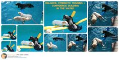 Join us on FB: www.facebook.com/FinetunedCanines Social swimming training with 3 dogs and building confidence in the water