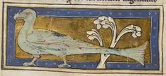 British Library Royal MS 12 C XIX (c1200-c1210) f40v