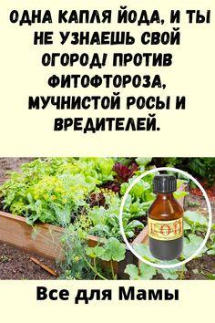 Diy Home Crafts, Gardening, Lawn And Garden, Diy Crafts, Diy Home Supplies, Horticulture, Diy Crafts Home