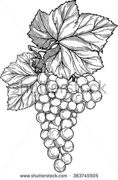Grape branch with bunch of grapes and leaves. Grape Drawing, Leaf Drawing, Glass Painting Designs, Paint Designs, Coloring Books, Coloring Pages, Vine Tattoos, Art Drawings For Kids, Fruit Art