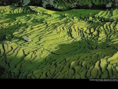 Nepal rice farming